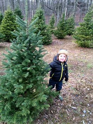 Dec082014_pickingoutthetree_3