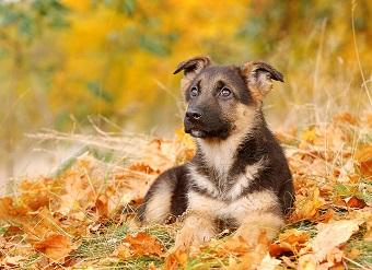 puppy_340