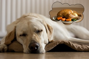dog-thanksgiving-turkey-480x320